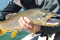 Fly Fishing for Trouts, Esquel Patagonia